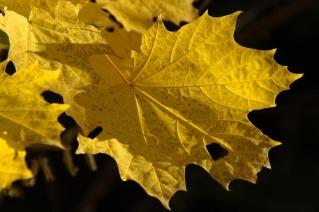 autumn-110668_640