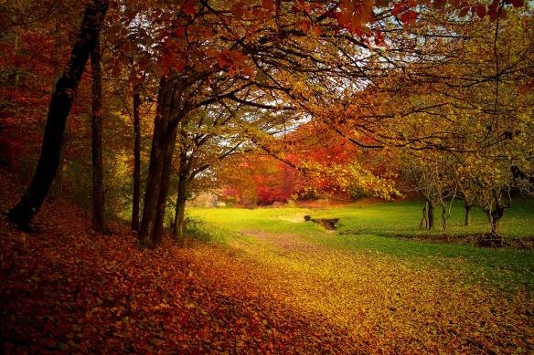 autunnoalberi
